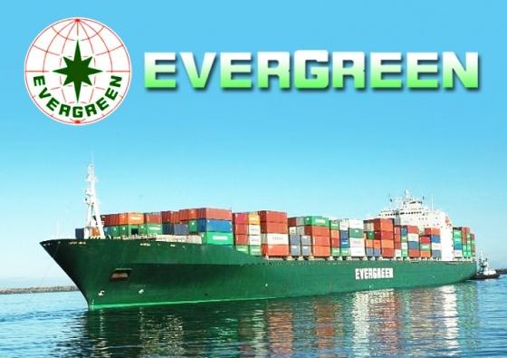 Evergreen shipping logo search